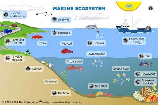 Ecosystem Services Benefits Supplied To Human Societies By Natural Ecosystems